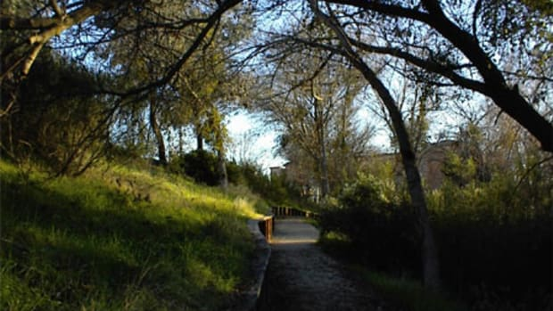 This is just one part of the Salinas River Trail that is shaded.