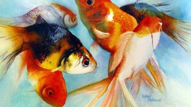 goldfish_varieties