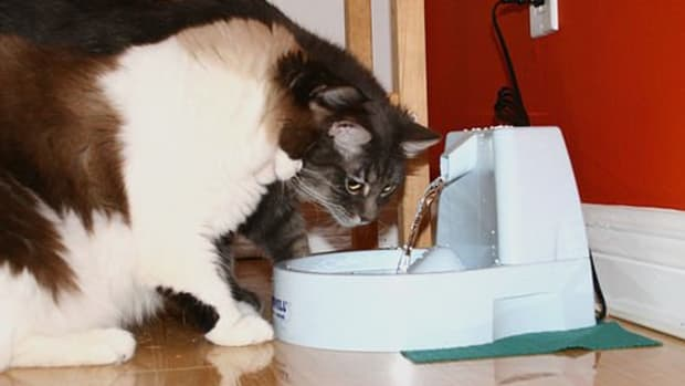 best-cat-water-fountain-what-to-look-for-in-a-cat-drinking-fountain