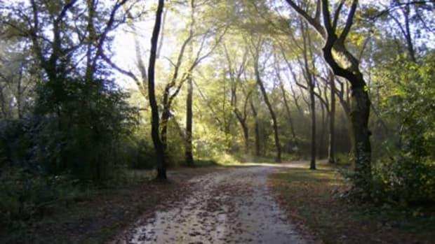 descriptive-essay-example-morning-jog-in-the-park