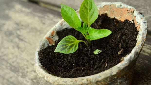 5-ways-for-your-small-homestead-to-turn-a-profit-quickly