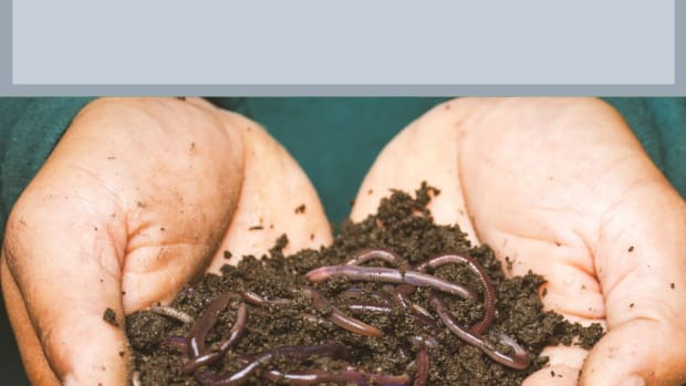 how-i-raise-composting-worms-in-my-basement