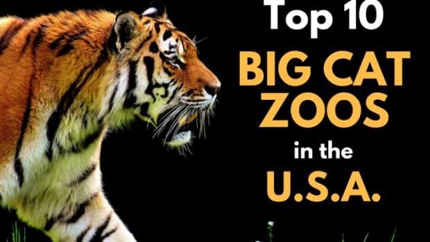 zoos-top-10-us-cat-collection-exhibits