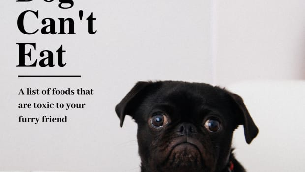 what-your-dog-cannot-eat-canine-toxidity