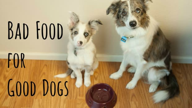 are-you-killing-your-dog-with-everyday-people-food-10-bad-treats-for-your-good-dog