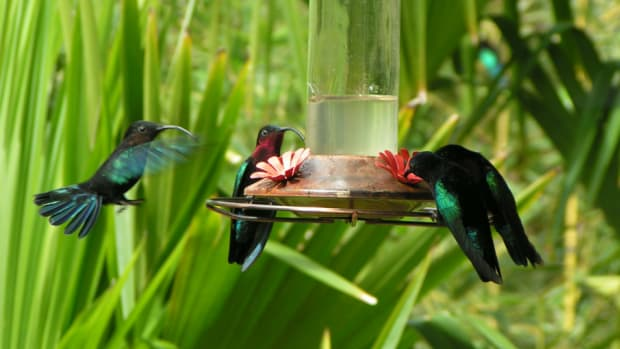 prevent-ants-on-hummingbird-feeders