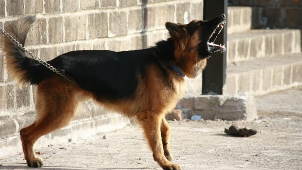 how-to-teach-a-german-shepherd-not-to-bark