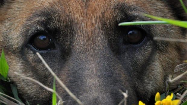 rescuing-a-german-shepherd