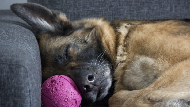 how-long-do-german-shepherds-live