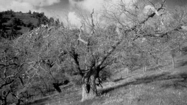 nature-haiku-wind-series