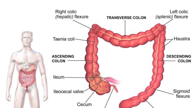 human-intestinal-flora-and-fecal-transplantation