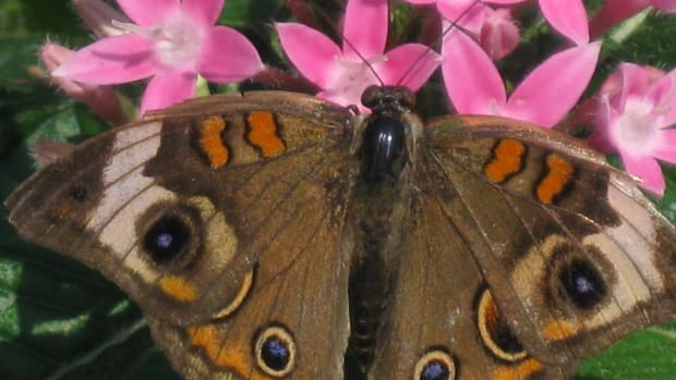 butterflies-symbols-of-life-and-hope