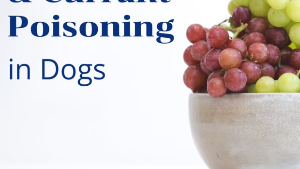 puppies-and-raisins-and-grapes