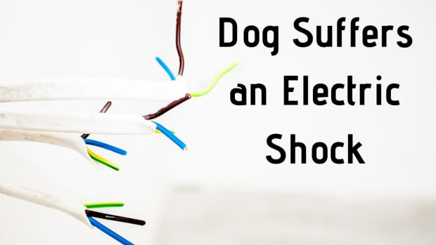 help-my-dog-has-been-electrocuted-what-to-do-if-your-dog-has-been-shocked