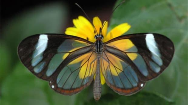 on-gossamer-wings-the-beauty-of-butterflies-and-moths