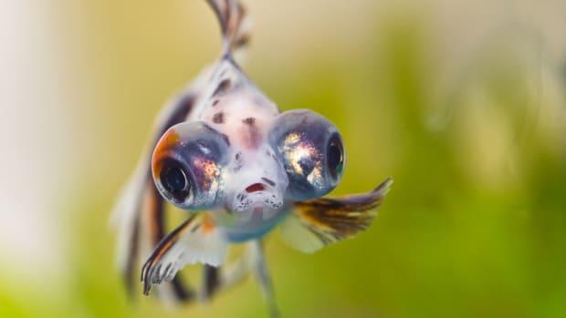 fish-intelligence-the-mastermind-behind-your-aquarium-glass