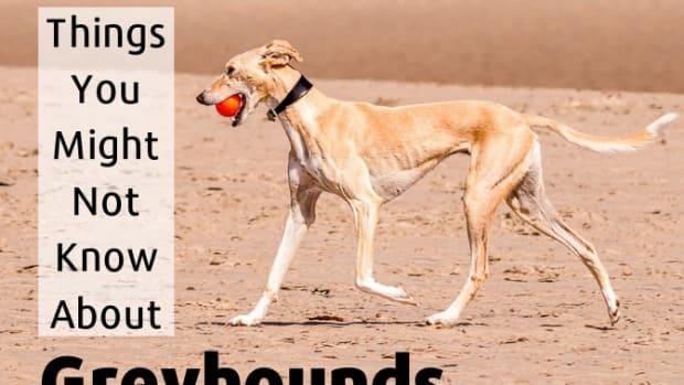 topgreyhoundfacts