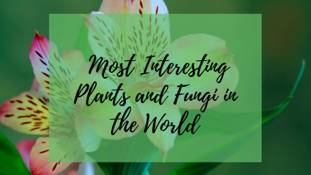 10-most-wacky-plants-of-the-world