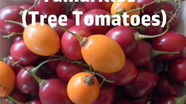 how-to-make-tamarillo-jam