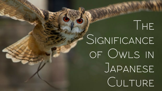 owls-in-japanese-culture