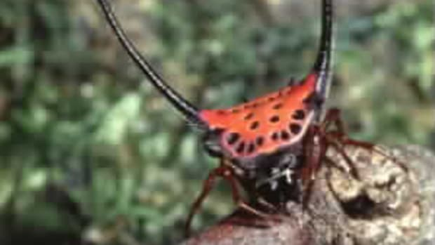 itsy-bitsy-spider-climbed-up-the-hubpage