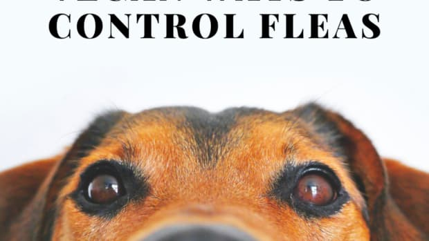 nontoxic-natural-flea-control