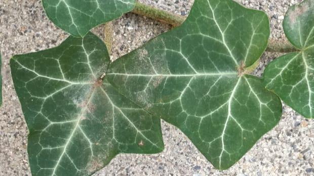 webbing-on-houseplants-plants-what-is-it-from