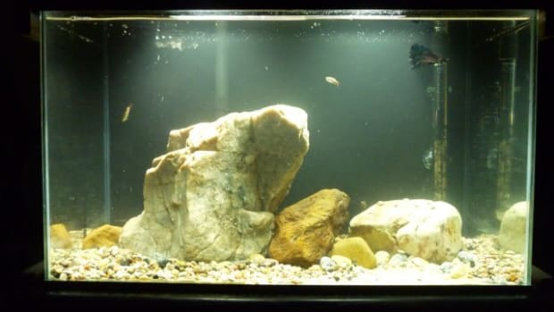rocks-in-aquariums