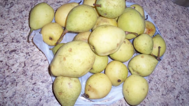easy-homemade-pear-wine-recipe