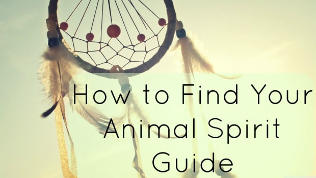 finding-your-spirit-guideanimal-totem