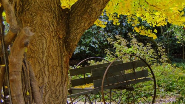 nature-haiku-autumn-beauty