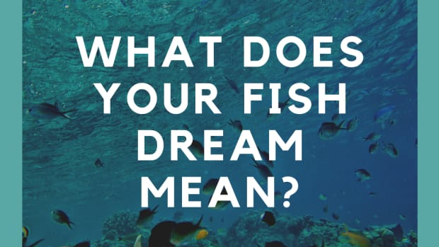 dreaming-of-fish-the-meaning-of-fish-in-dreams