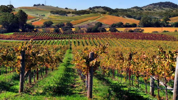 an-introduction-to-california-wines