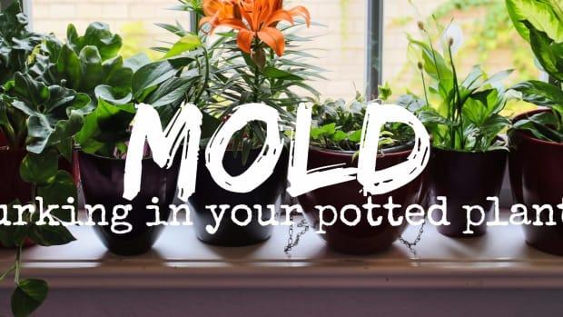 moldy-potting-soil