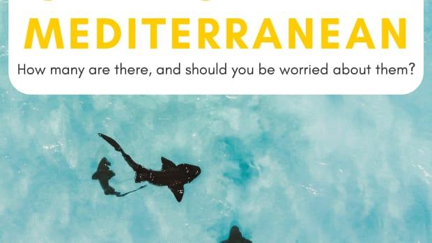sharks-in-the-mediterranean-sea
