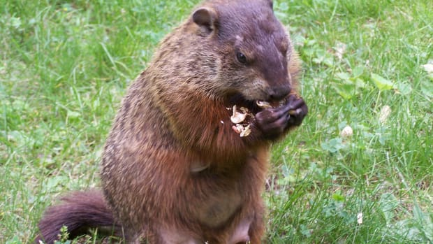 10-ways-to-celebrate-groundhog-day