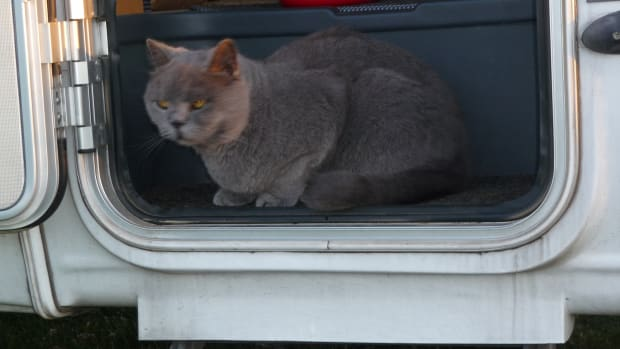 cats-on-mobile-homes