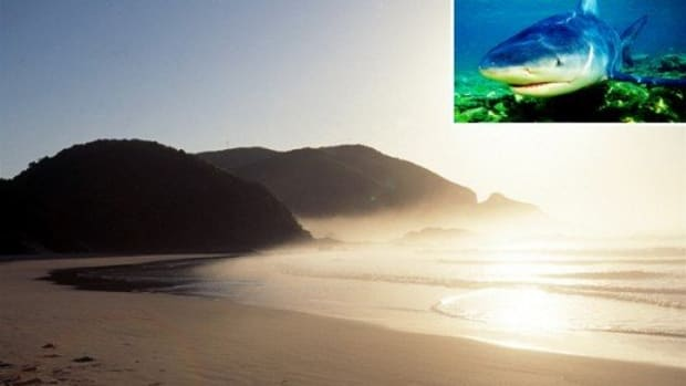 the-most-dangerous-beach-in-the-world-for-shark-attacks