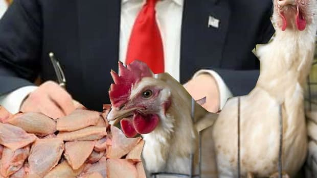 inauguration-of-president-trump-versus-usa-chicken-dumping-in-south-africa