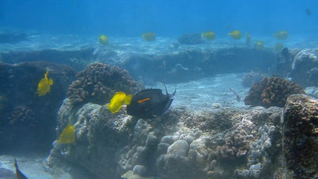hawaii-reef-wildlife-extraction-not-the-message-of-aloha