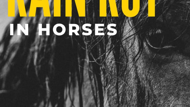 how-to-treat-rain-rot-in-horses
