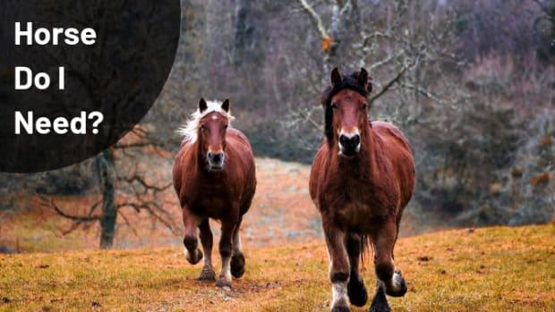 howlargeahorse