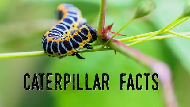 caterpillar-q-and-a