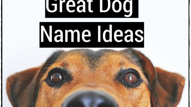 great-dog-name-ideas