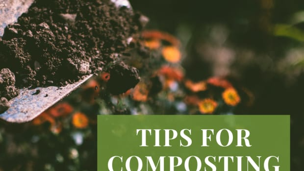 items-to-compost