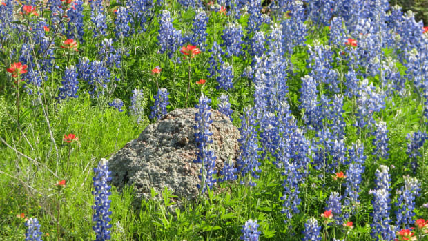 where-to-go-to-see-texas-wildflowers