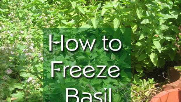 freeze-basil
