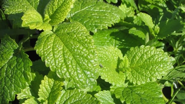 herbs-that-help-you-relax