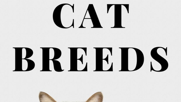 different-cat-breeds-how-to-identify-pet-cats