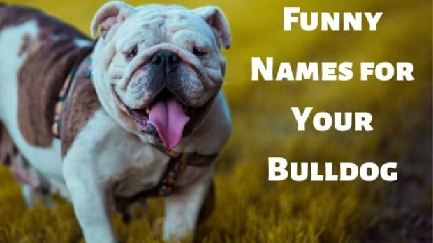 bulldog-names
